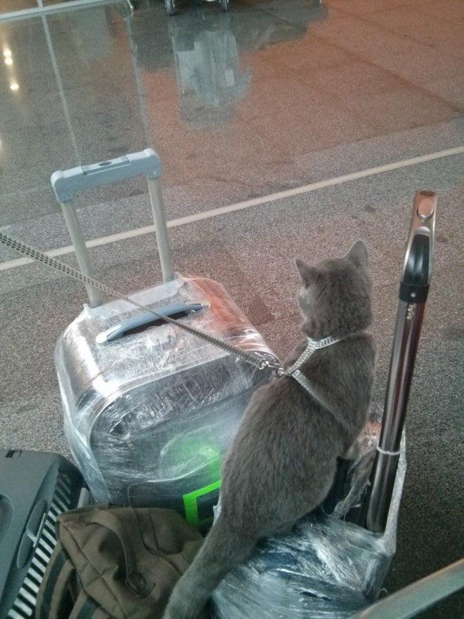 перевозка кота в Китай