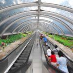 В Китае был построен самый длинный эскалатор