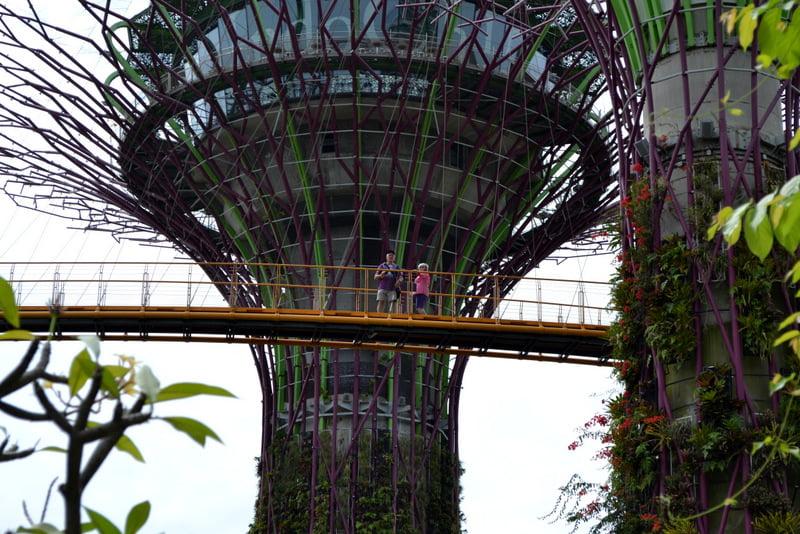 сады сингапура