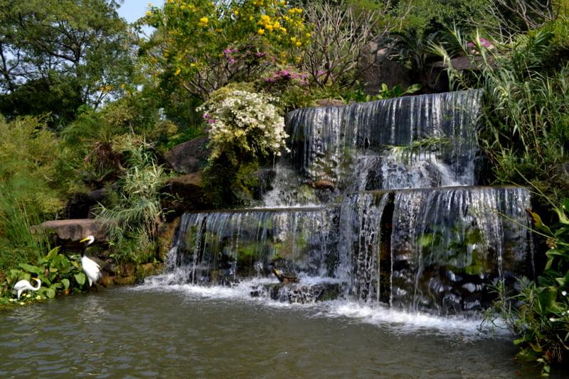 Lotus waterfall