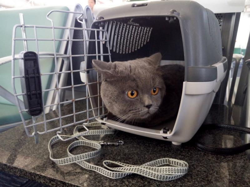 Перевозка животных. Перевозка кота из Китая в Украину