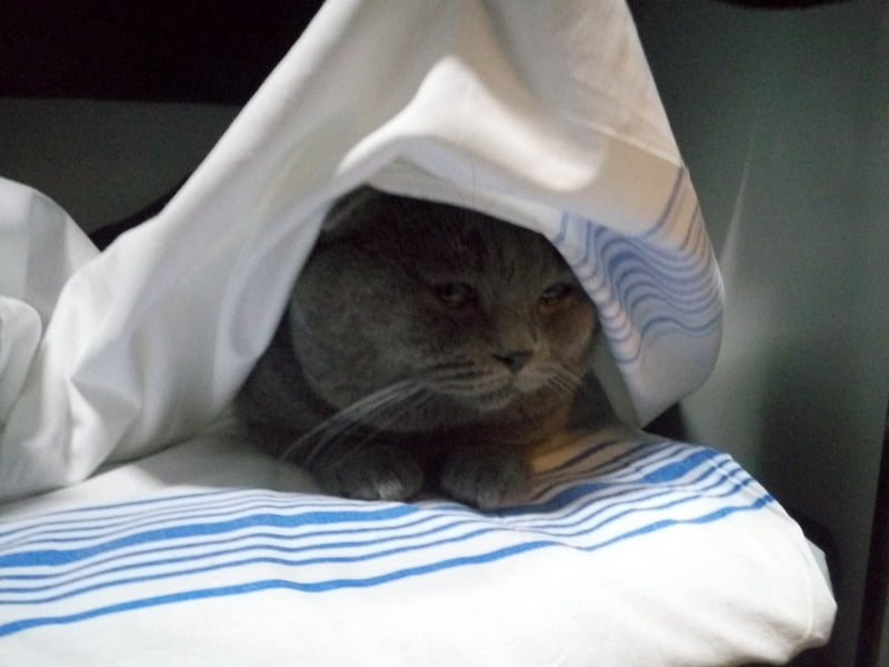 Перевозка кота в поезде